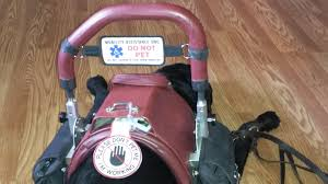Dogs Helping Blind People Why You Can U0027t Pet Service Dogs Anything Pawsable