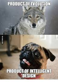 Angry Wolf Meme - product of evolution product of intelligent design memeeulcom