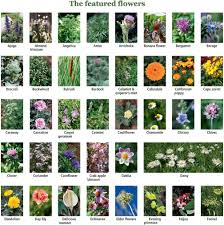 List Of Flowers by 100 Edible And Healing Flowers Cultivating U2013 Cooking U2013 Restoring