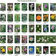 100 edible and healing flowers cultivating u2013 cooking u2013 restoring