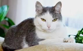 gatti divani 5 modi per evitare che il gatto rovini il divano tiragraffi per