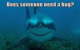 Funny Shark Meme - 11 funny shark memes to celebrate shark week