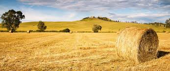real estate agency in tuscany properties for sale in tuscany and