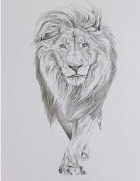 female lion tattoo drawing