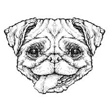 hipster style sketch of funny pug dog vector illustration stock
