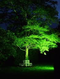 outside wedding and event decoration uplighting to trees either