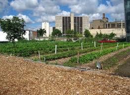 Houston Urban Gardeners - 34 best west sacramento urban farm images on pinterest