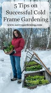 5 tips to successful cold frame gardening cold frame gardening