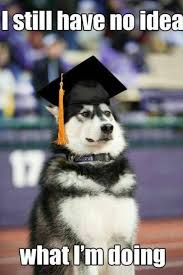 dog graduation cap and gown 33 images about graduation caps on we heart it see more about