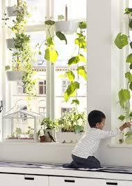 plante suspendue atout gain de place dans la déco places and deco