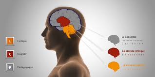 si e des motions dans le cerveau le neuromarketing adapté aux commerces de bouche nakide