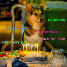 Doge Meme Font - mcp riding memes with style in 2014 media connect partners