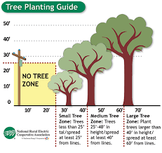 tree planting guidelines fayette electric cooperative