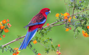 bird wallpaper red parrow bird on flowers tree wallpapers hd wallpapers rocks