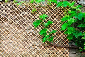 natural stripped wicker trellis nortene