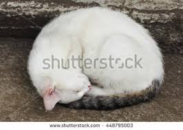 Cat Laying On Glass Table Curled Up Stock Images Royalty Free Images U0026 Vectors Shutterstock