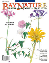 bay nature april june 2016 by bay nature institute issuu