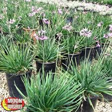 moon valley nurseries plants