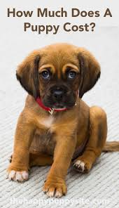 how much does a cost by the puppy site