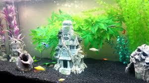 Petsmart Christmas Aquarium Decorations by Batman Aquarium Fish Tanks Pinterest Aquariums Fish Tanks
