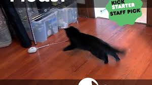 mousr the robotic mouse that plays with your cat by petronics