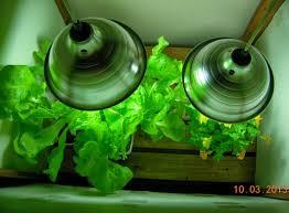 is growing vegetables indoors cost effective indoorsalad
