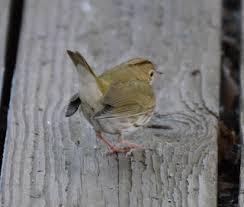 The Backyard Bird Company - ohio birds and biodiversity december 2011