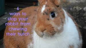 6 Rabbit Hutch 6 Ways To Stop Your Rabbit From Chewing Their Hutch Youtube