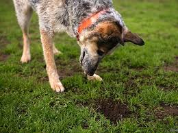 how to stop a dog from digging new dog owners