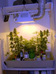 400 Watt Hps Grow Light My Perpetual Sog Cabinets Are Finally Finished Page 24 Grow