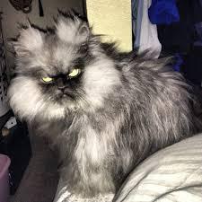Angry Cat Meme - create meme wu wu grumpy cat meme angry cat pictures
