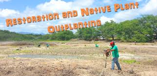 native plant nurseries native hawaiian plant nursery oahu hi habitat restorations