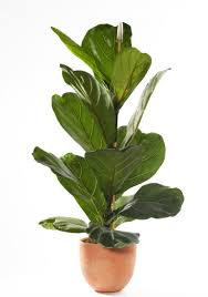 indoor plant 8 best indoor plants how to take care of them architectural digest