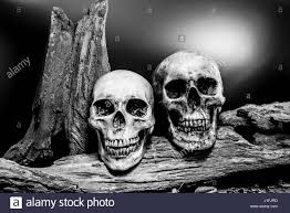 halloween dark background still life painting photography with couple human skull on dried