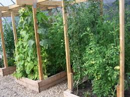 trellis vegetable garden solidaria garden