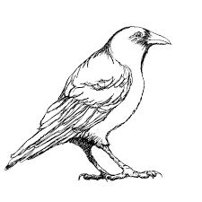 crow clipart outline pencil and in color crow clipart outline