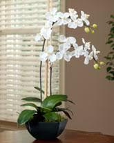 silk orchids shop silk vanda orchid plant at petals