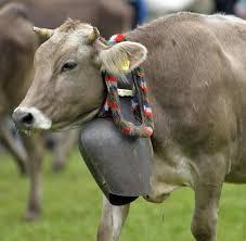K Hen Schweiz Streit über Alpen Sound Tierschützer Fordern Ein Verbot Von