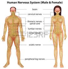 Private Parts Female Anatomy Human Body Parts Images U0026 Stock Pictures Royalty Free Human Body