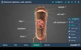 Interactive 3d Anatomy Bacteria Vr 3d Android Apps On Google Play
