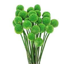 billy balls green flower