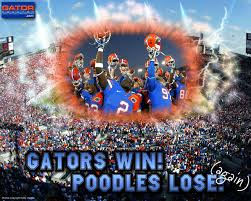 gators win poodles lose desktop wallpaper