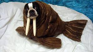 in costumes 15 dogs in costumes that will make you excited for