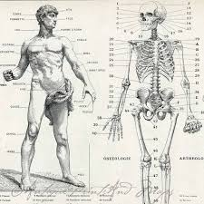 Human Anatomy Integumentary System Anatomy Organ Pictures Human Anatomy Drawings Top Collection