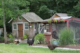 Backyard Chicken Com The Chicken Chickens U0026 Obesity The Silent Killer How To