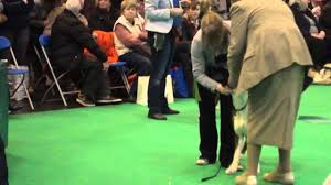 boxer dog crufts 2014 crufts 2013 best in breed boxers youtube