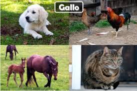 imagenes de animales y cosas christian appsmac com página 11