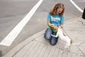Swifto Nyc Dog Walking With Gps Tracking