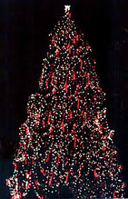 big christmas large record breaking outdoor christmas trees egan acres