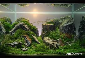 Aquascape Designs Products The Most Awesome Images On The Internet Aquascaping Aquariums